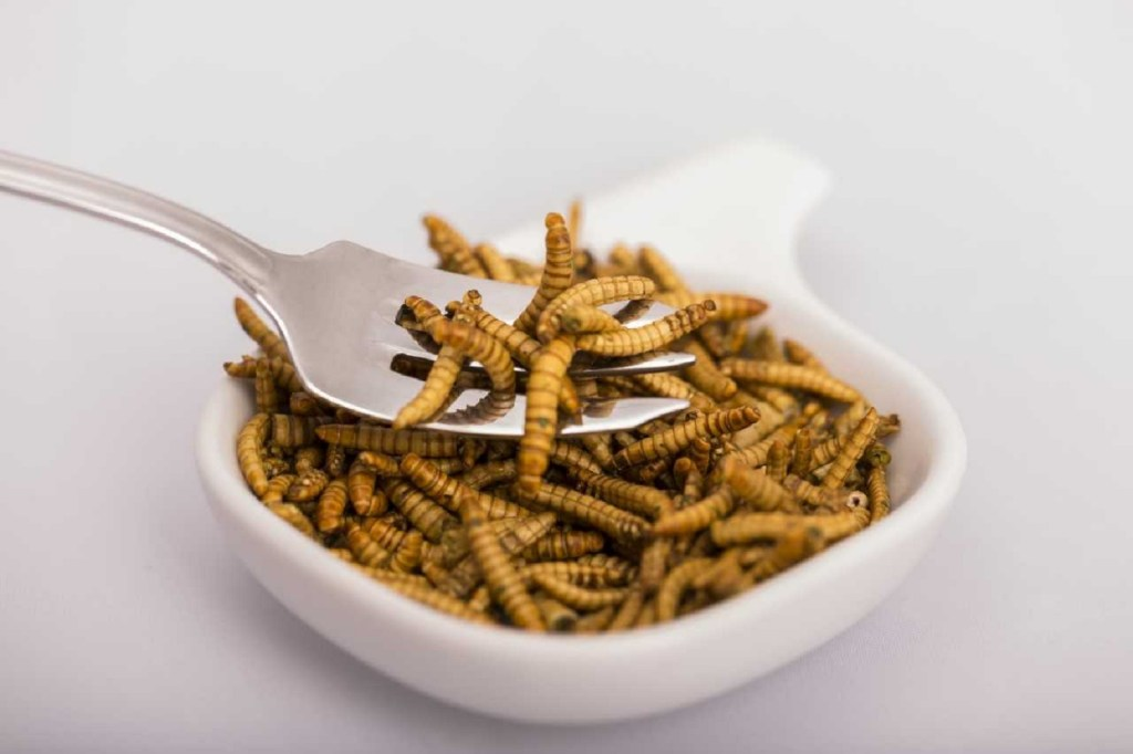 What if insects were on the menu in Europe? [Science and Technology podcast]