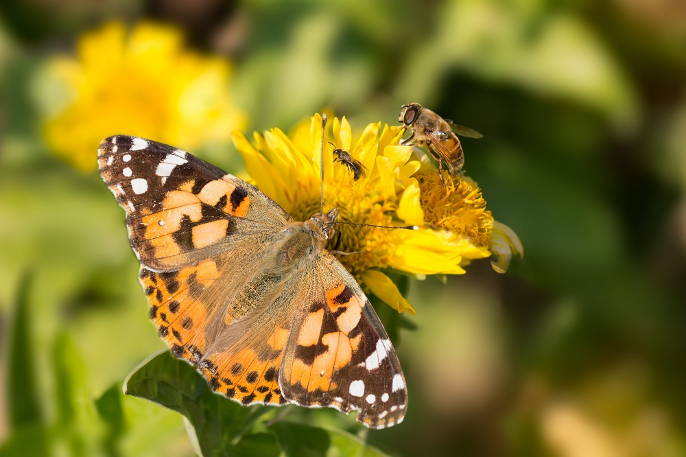 Protecting pollinators in the EU [Policy Podcast]