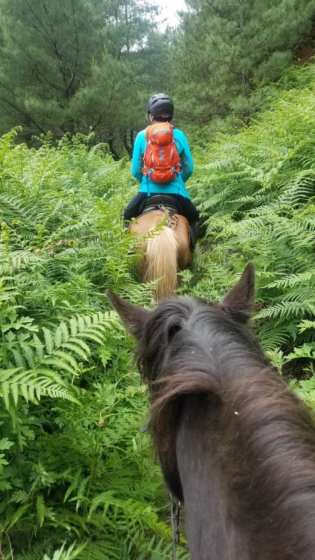 During horseback trail riding in Bhutan the ferns are taller than the Bhutanese mountain ponies