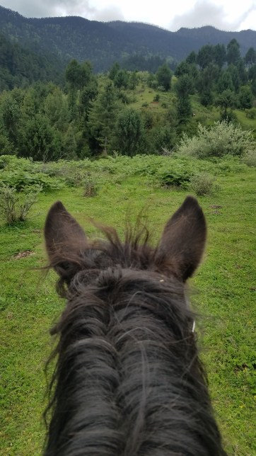 The view through the ears of a pony while horseback trail riding in Bhutan