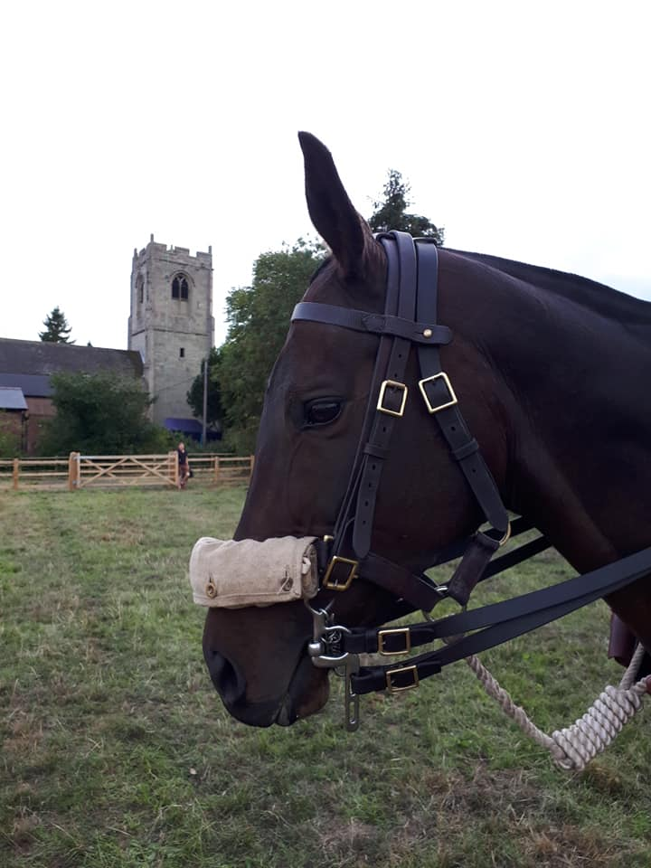 historical reenactment showing World War I bridle and gas mask on horse