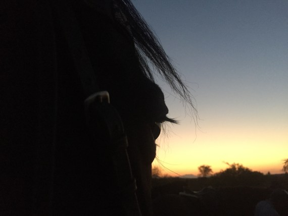 Giving my safari horse a break while watching the sun set