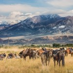 The Mountains of Heaven in Kyrgyzstan serve as stunning background in this photo