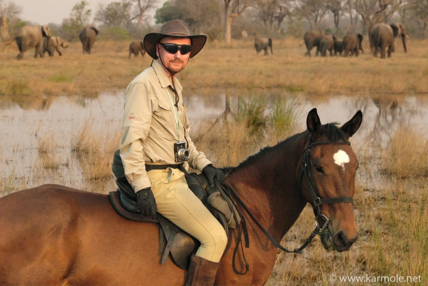 A portrait of rider and horse in front of a herd of elephants in Botswana.