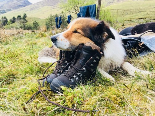 Collie Finn resting on Clare's boots during the horseback riding journey through the Lake District