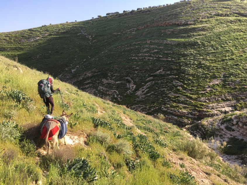 walking on steep mountains to follow the Jordan Trail with a Donkey