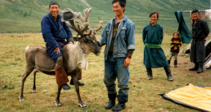 the reindeer herders in Mongolia ride their reindeer