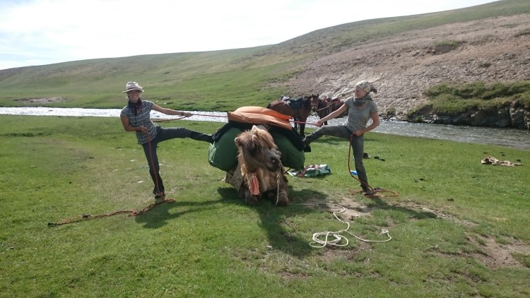 Camel packing is one of the challenges every morning when horseback riding through mongolia