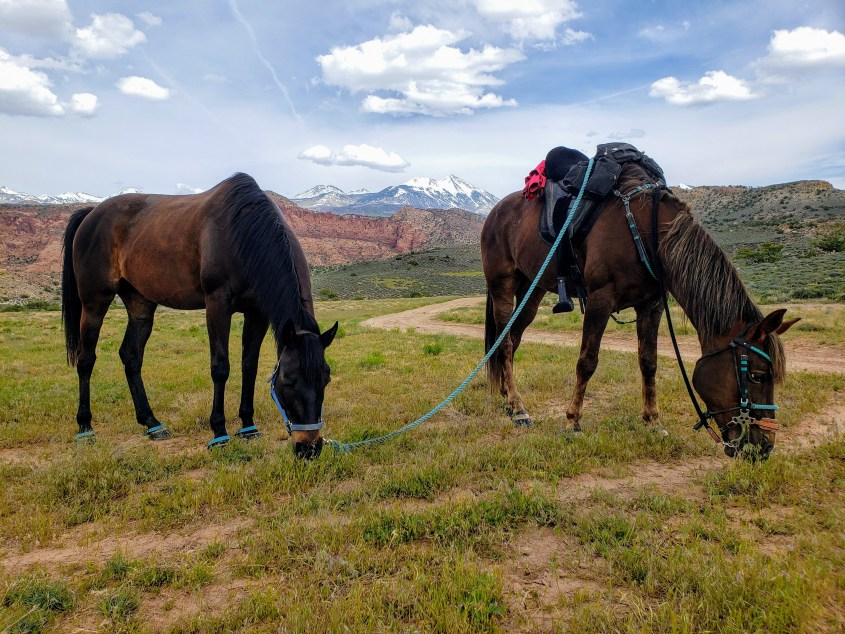 The horses are grazing during a break in Moab, Utah