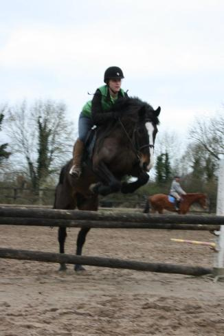 A horse in training for show jumping and hunting ridden by a young woman working with horses in Ireland