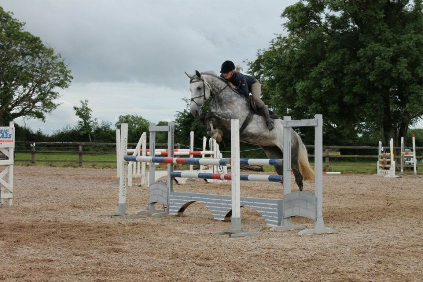 A grey horse in Ireland in training is being jumped over a show jumping fence