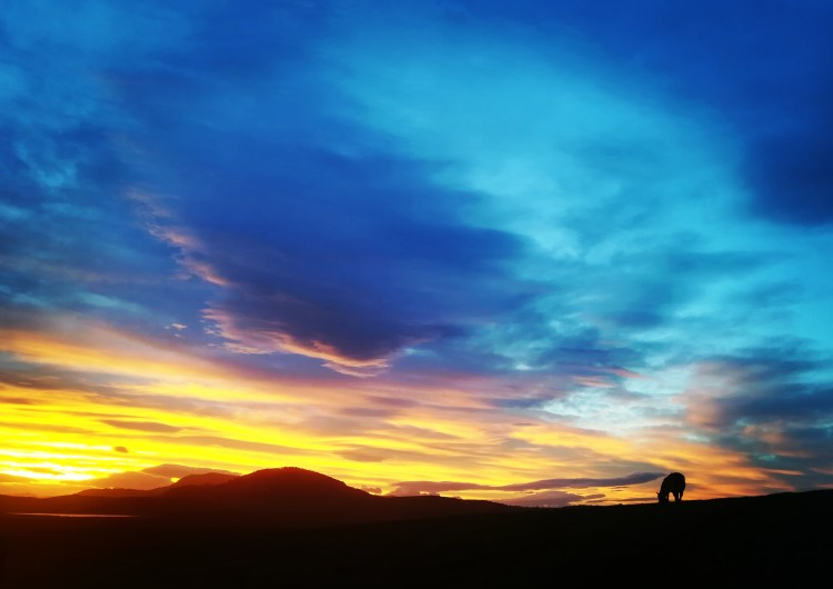 A beautiful sunset over a grazing horse in the mountainous landscape of South America