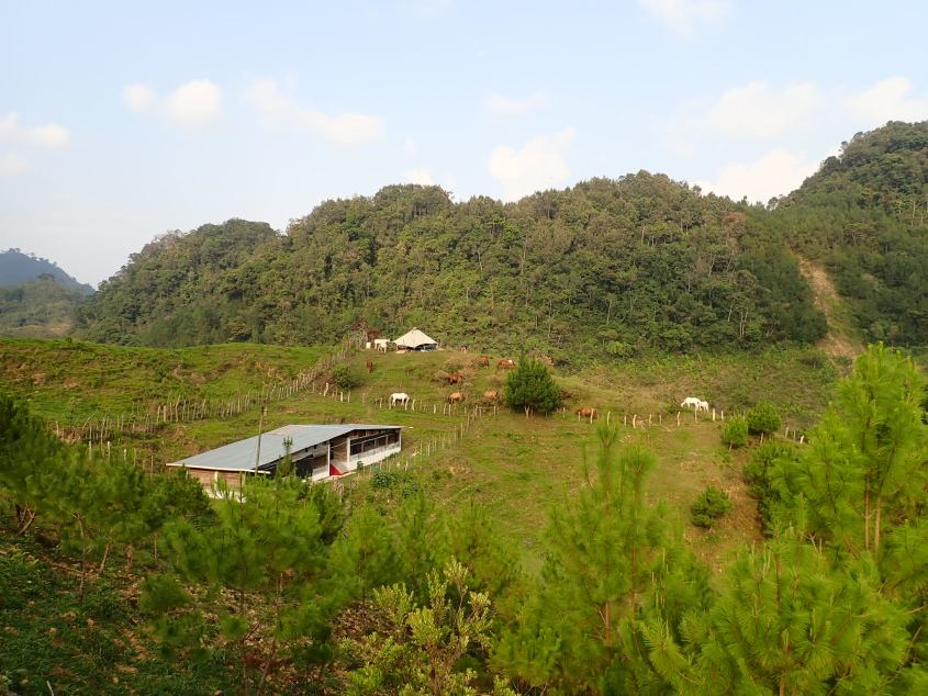 The community tent is set up high on a hill with the horses grazing around it in Guatemala