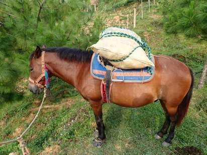 A pony named Capítan is carrying parts of the community tent
