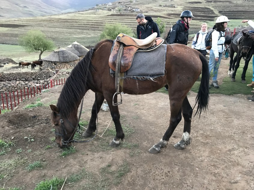 The horse I was riding during horse trekking in Lesotho was tacked up with an old Stübben saddle
