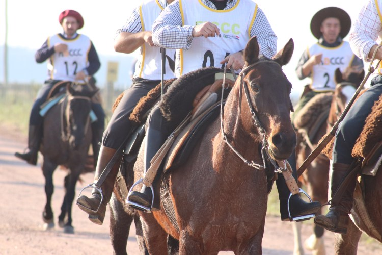 Criollo horses with typical gaucho gear in a marcha resistencia competition