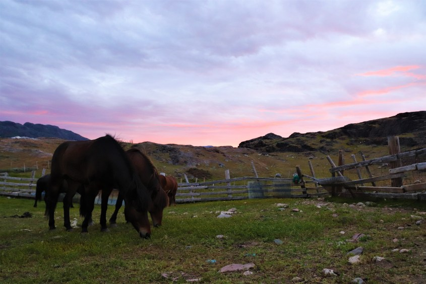 A beautiful sunset is our reward after a long day of riding our horses in Greenland.