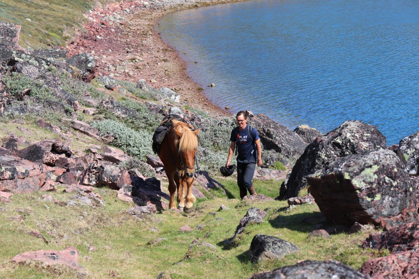 The horses in Greenland are Icelandic horses. Charlie in this photo is very well trained and usually waits for our cameraman. On this slope though he decided to guide rather than carry.