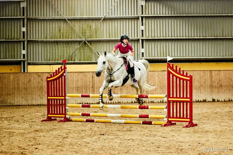 bridleless show jumping with a horse is the best horse therapy to fight autoimmune diseases like lupus