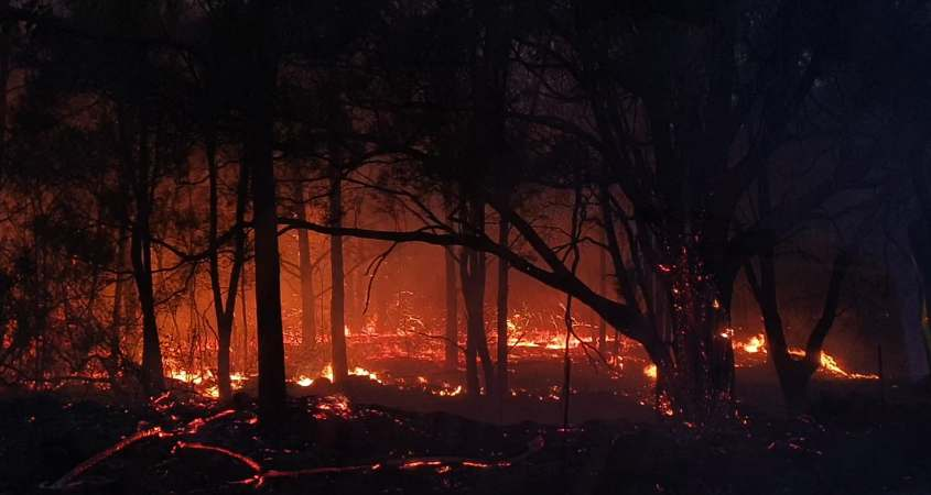 Trees and bushes are destroyed by the fire after a flashover inferno at Thornton-Mulgowie