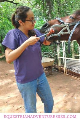Pinterest Pin for article: Meet the First Formally Trained Horse Dentist in India