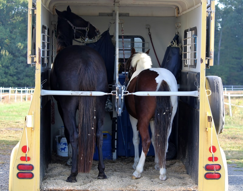 Allowing horses free access to hay is recommended to provide nourishment and keep them busy. Hay nets and slow feeders are often used to regulate consumption while hauling.