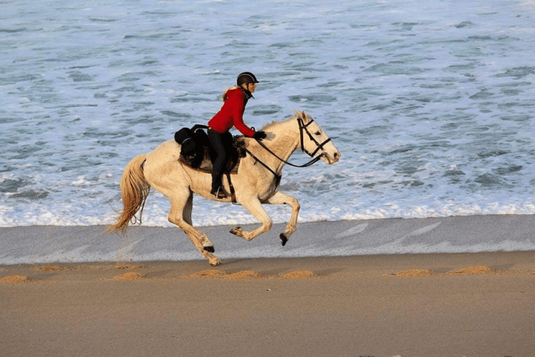 A woman is galloping a horse along a beach while horseback riding in Portugal