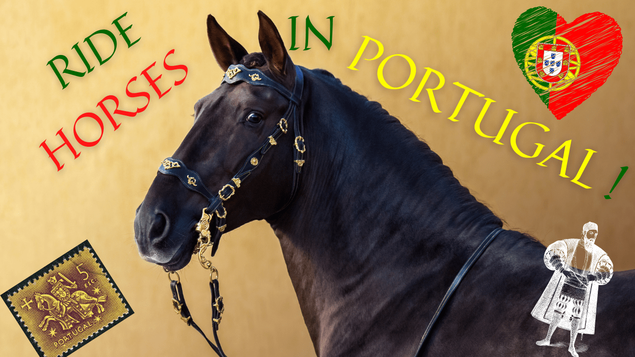This article will tell you everything you need to know for your next adventure doing horseback riding in Portugal
