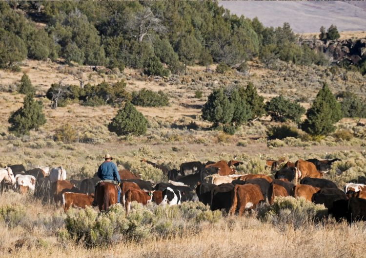 Horseback riding in New Mexico is traditionally done in Western Style