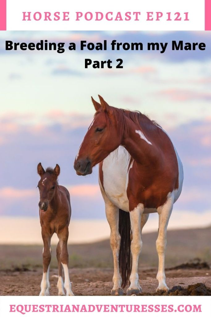 Horse and travel podcast pin - Ep 121 Breeding a Foal from Your Mare - Part 2