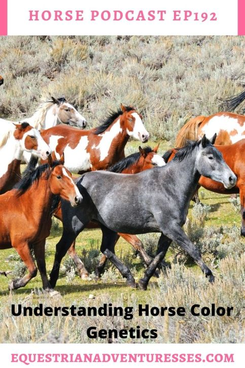 Horse and travel podcast pin - Ep192 Horse Color Genetics