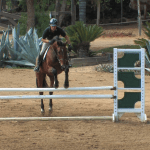 Train Your Horse To Jump Straight Equestriancoach Com Blog