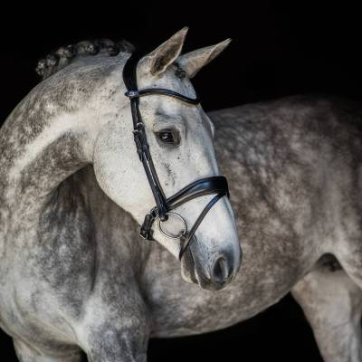Flying Chnage dressage bridle ps of sweden