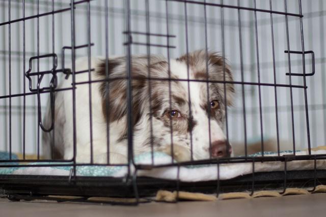 Die Vorteile einer Hundebox Beitragsbild