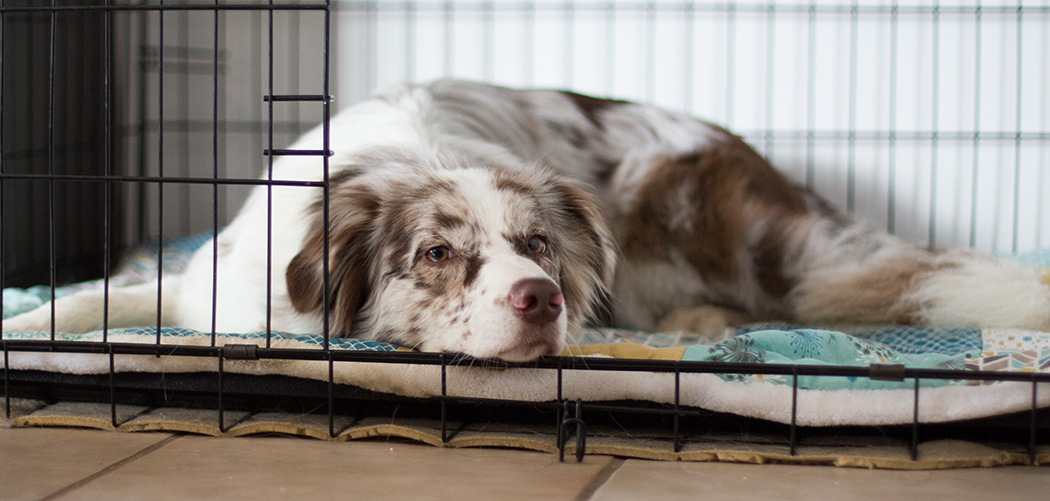 Die Vorteile einer Hundebox Titelbild