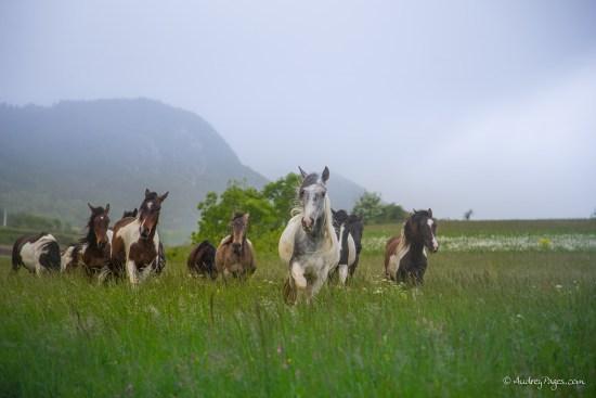 chevaux pieds nus rodome