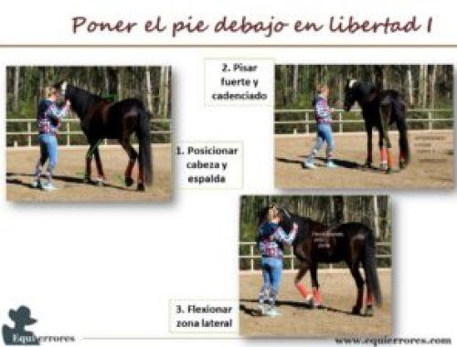 incomodidad del caballo blog de youtube