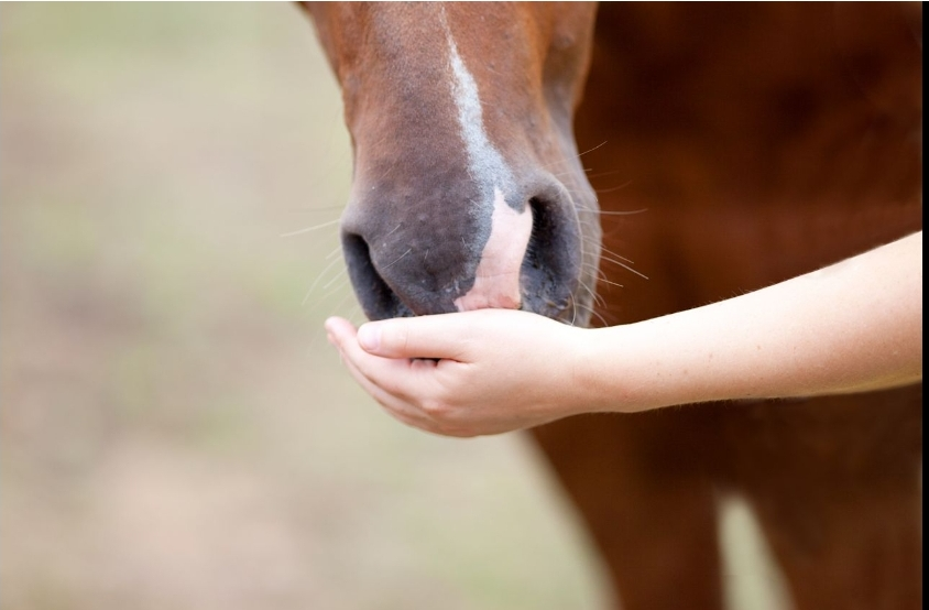 Horse Treats_Equillence