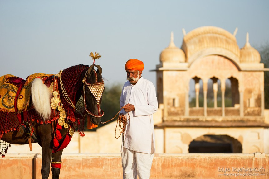 Portrait of an old man with Marwari mare in India