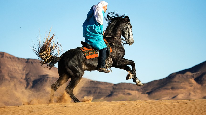 Berber ridding Arabian-Berber stallion Prince on the dunes