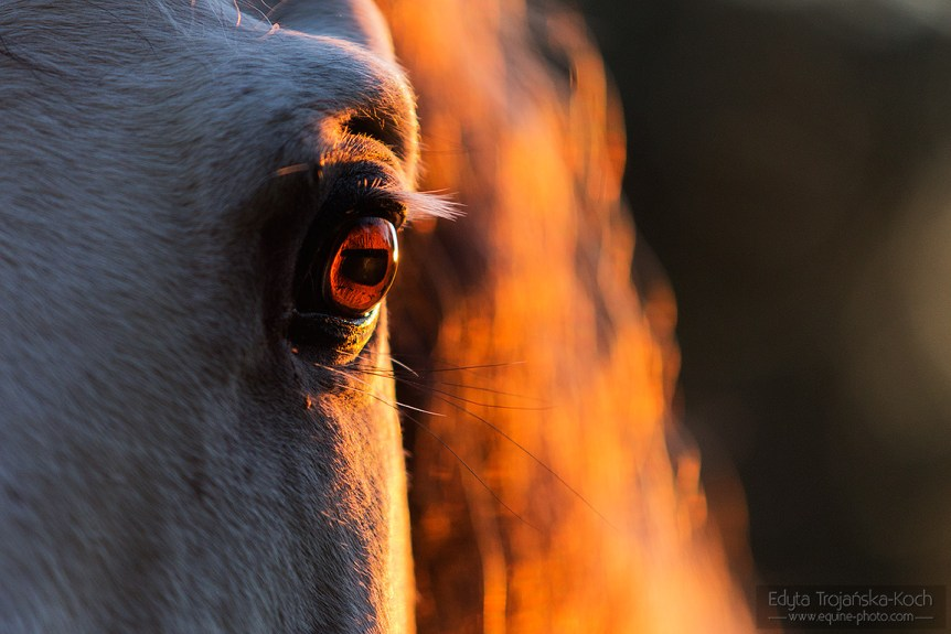 Andalusian's eye at sunset