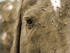 Horse Supplements, Equine Stewardship, Equine Challenge Supplements