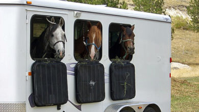 Horse Trailering Tips, Too Hot To Trailer Or Ride?
