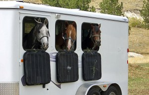 Equine Challenge When Is It Too Hot To Trailer?