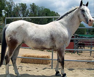 What Is Equine Insulin Resistance (IR)