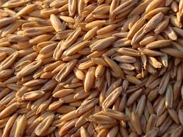 Grains Fed To Horses, Oats, barley, wheat, corn, Not All Grains Are Meant For Horses