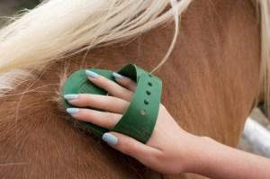 Stewardship or Horsemanship?