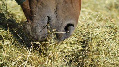 Fall Transition & Chronic Horse Colic Tips