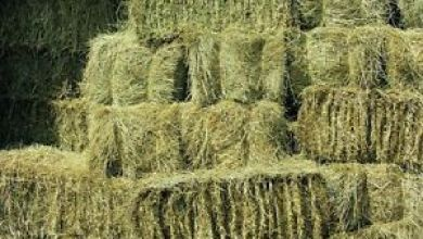 Hay Types & Varieties, Which Hay Is Best For Your Horse?