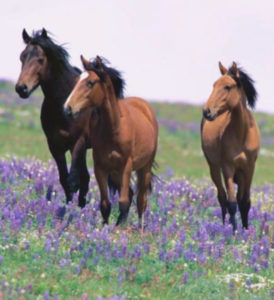 Equine Challenge Essential Oils For Horses